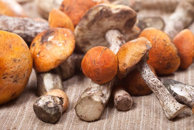 как сушить грибы в микроволновой печи